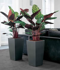 Indoor Plant Displays supplied by Environmental Contract Services